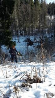 Helmikuussa 2017 seikkailimme Espoon Juvanmalmin metsissä katsomassa juurakkoehdokkaita.